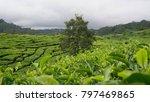 the tea garden | Shutterstock . vector #797469865