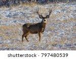 winter at roxborough state park ... | Shutterstock . vector #797480539