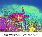 sea turtle in sea water... | Shutterstock . vector #797504461