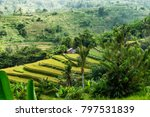 rice fields in the balinese... | Shutterstock . vector #797531839