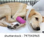 Small photo of ill puppy dog admit in veterinary hospital or clinic
