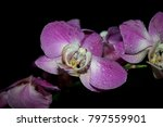 beautiful colorful orchids... | Shutterstock . vector #797559901
