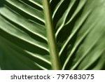 tropical dark green leaf   Shutterstock . vector #797683075