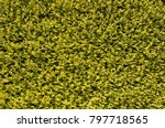 close up view of a lush green... | Shutterstock . vector #797718565