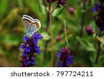 Blue Butterfly On Beautiful...