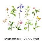 set of meadow flowers  herbs ... | Shutterstock . vector #797774905