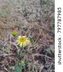 Small photo of Flower Flower Flower