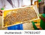 beekeeper is holding up wooden...   Shutterstock . vector #797831407