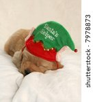 adorable golden retriever puppy sleeping with Santa's Helper hat - stock photo