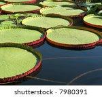 Water Platter