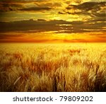 Golden Field With Sunset