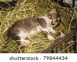 Stock photo cute little kitten sleeping 79844434