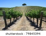 Beautiful Rows Of Grape Vines...