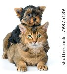 Stock photo cat and puppy in studio 79875139