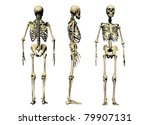 3 views of a male skeleton isolated on a white background - stock photo