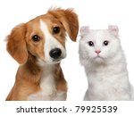 Stock photo mixed breed puppy months old and a american curl cat and a half years old in front of white 79925539