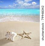 caribbean beach shell and... | Shutterstock . vector #79948342