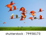 Stock photo flock of scarlet and white ibises in flight above green meadow with blue sky background flying 79958173