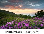 Blue Ridge Parkway Mountains Sunset over Spring Rhododendron Flowers Blooms scenic Appalachians near Asheville, NC - stock photo