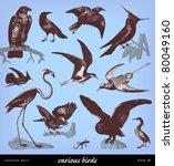 Engraving Vintage Bird Set From ...