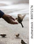 bird feeding hand | Shutterstock . vector #80072176