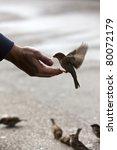bird feeding hand | Shutterstock . vector #80072179