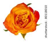 Beautiful Orange Single Rose...