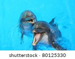 two dolphins swim in the pool | Shutterstock . vector #80125330