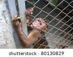 A Monkey Sits In A Zoo Behind...