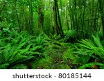 lush rainforest path | Shutterstock . vector #80185144