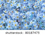 Background Of Many Blue Flowers