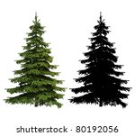 Ultra Detailed Picea Spruce...