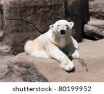 Polar Bear A polar bear (Ursus maritimus) rest on a rock in the bright sun - stock photo