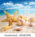 Starfish And Seashells On The...