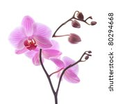phalaenopsis orchid branch... | Shutterstock . vector #80294668