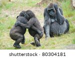 Stock photo two young gorillas dancing while the mother is watching 80304181