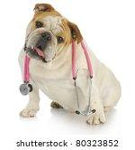Stock photo veterinary care english bulldog with stethoscope around neck on white background 80323852