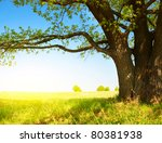 big tree with fresh green... | Shutterstock . vector #80381938