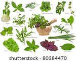 Fresh Herbs Collection Set...