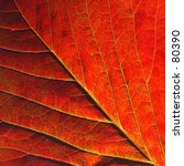 red leaf | Shutterstock . vector #80390