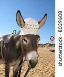 Portrait Of A Donkey In A Hat...