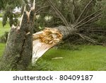 pine tree on the ground from... | Shutterstock . vector #80409187