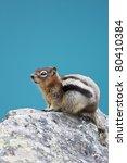 Постер, плакат: A chipmunk sitting