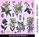 engraving vintage plant set... | Shutterstock .eps vector #80414815