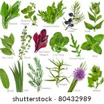 Collection Set Of Fresh Herb...