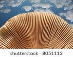 close up  of mushrooms under... | Shutterstock . vector #8051113