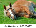 Brown horse on a pasture - stock photo