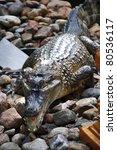 Crocodile On Stone - stock photo
