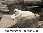 Polar Bear On A Rock A polar bear sunning himself while laying on a rock.  Ursus maritimus - stock photo