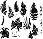 Collection Of Fern Silhouettes